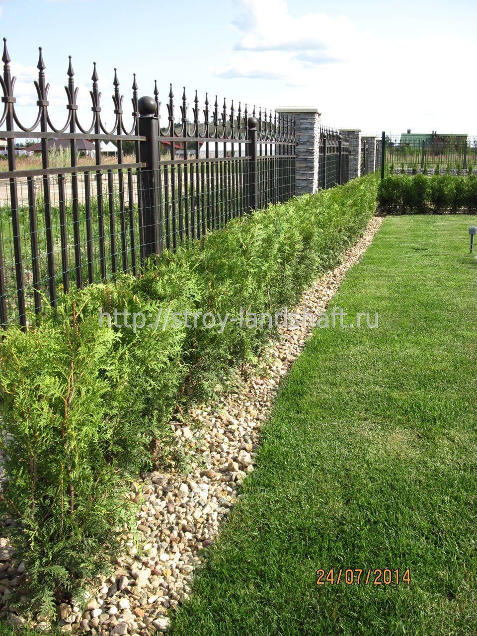 Живая изгородь на даче своими руками какие растения и фото